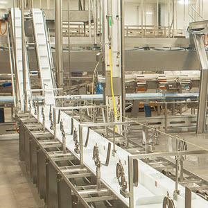 enap-inghams-conveyor-square